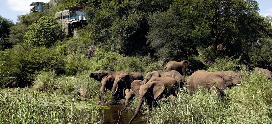singita game reserves cape town south africa photo